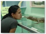 me kisses baby croc at crocolandia