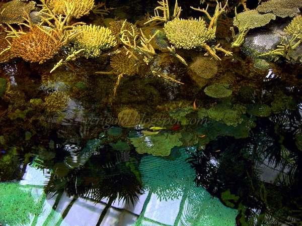 Тропические рыбки и кораллы в Океанариуме Лиссабона
