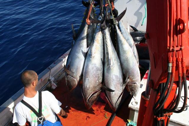 9 Gambar Pesta Menembak Ikan yang Kejam