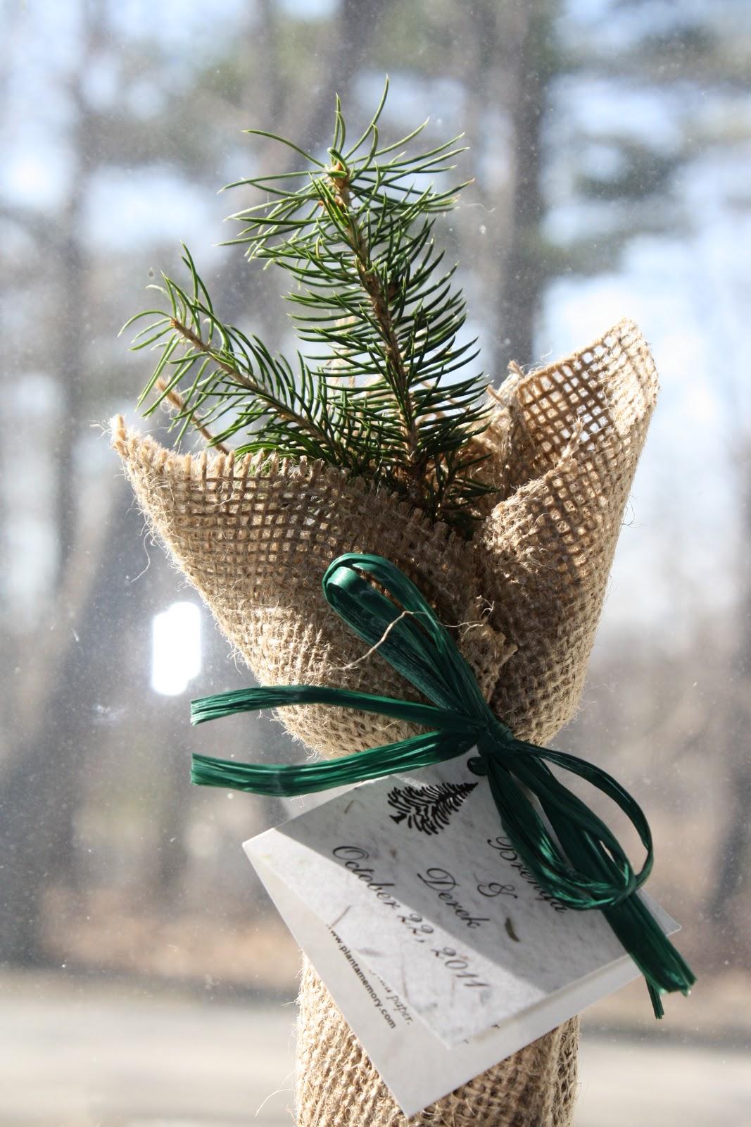 Wedding (Version 2.0): Wedding Favors: Tree Seedlings