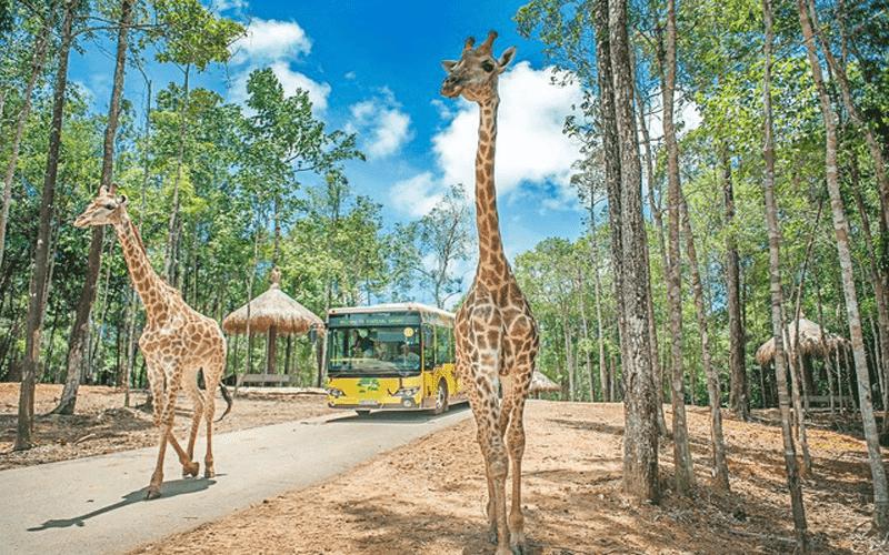 cong vien safari