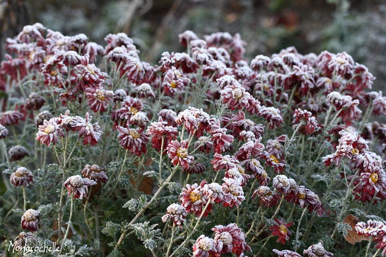 FPJ Automne 2012/Hiver 2013 ChrysanthemumMammoth111028_0016RM