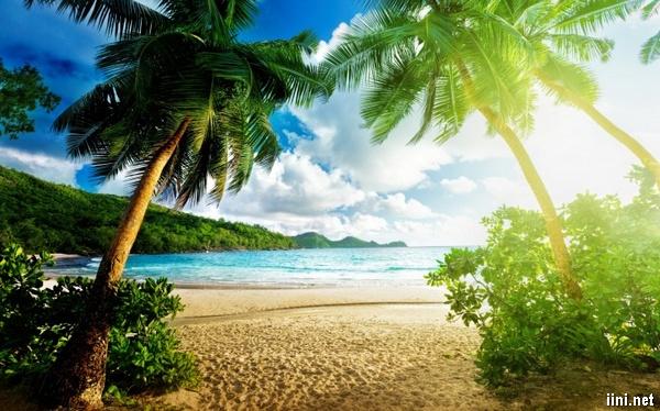ảnh bãi biển đẹp với nắng vàng