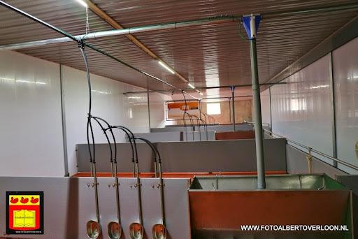Open dag varkensbedrijf molenpas overloon 29-06-2013 (8).JPG