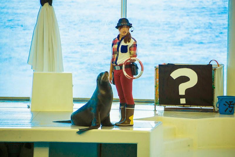 アクアワールド大洗水族館 イルカ・アシカオーシャンライブ 写真4