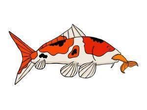 Cá Koi ăn cá khác