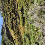Moss on cliff walls (98645)