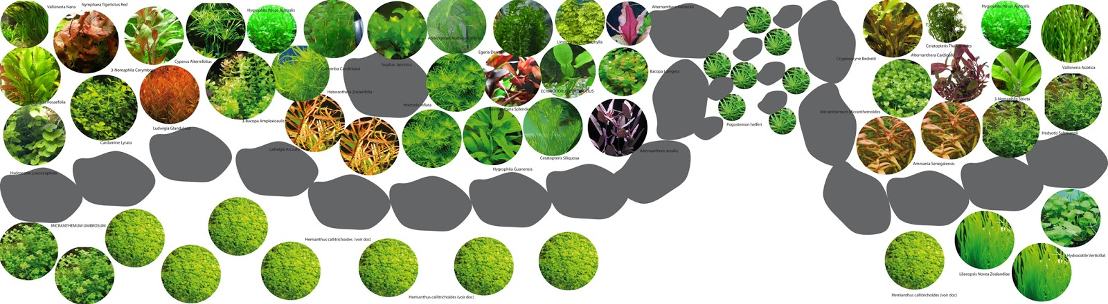 Voici le plan des roches et des plantes que jai prepare vu de ...