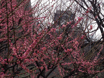 Pink ume and tower