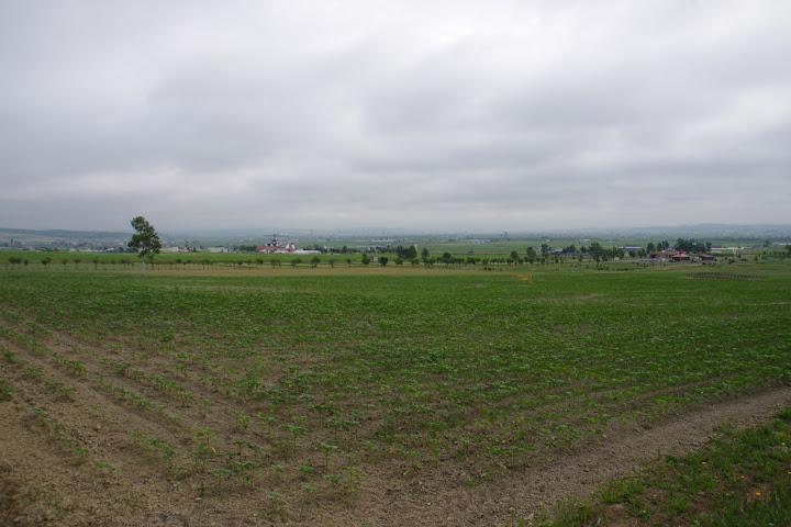 写真:東側エリア