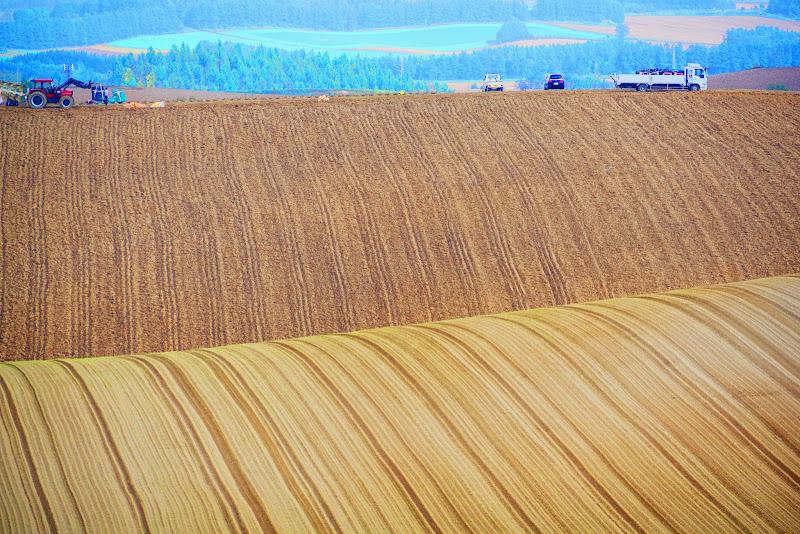美瑛 ルベシベの丘 写真5
