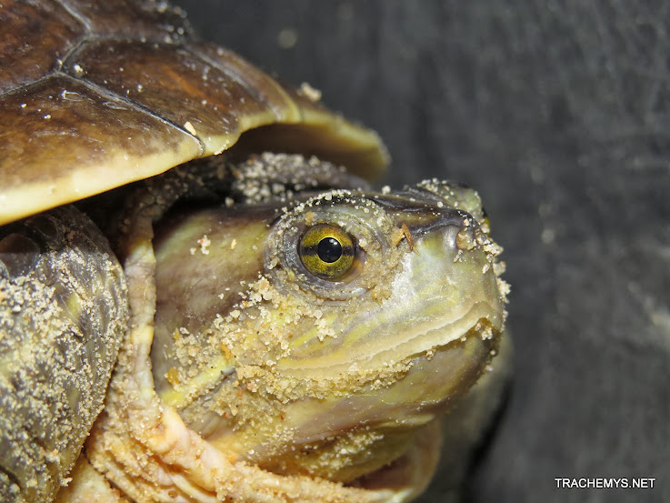 mes tortues (BK) - Page 12 IMG_4500