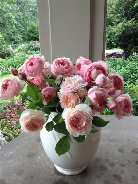 Một bình cắm hoa được trang trí bằng 2 giống hoa hồng: hồng triệu đô Juliet ở phía trước, và hồng The Alnwick làm nền ở phía sau