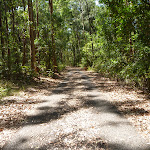Trail close to Richley Reserve in Blackbutt Reserve (401464)