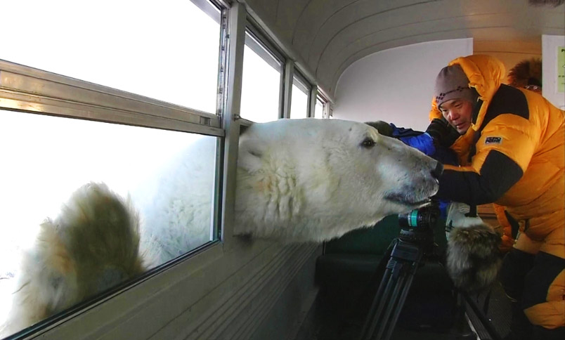 Urso pardo vs Urso polar Polar-Bear-Bus