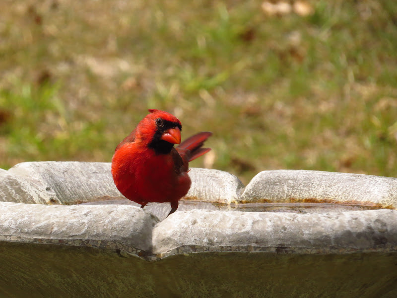 cardinal09162014-1.jpg