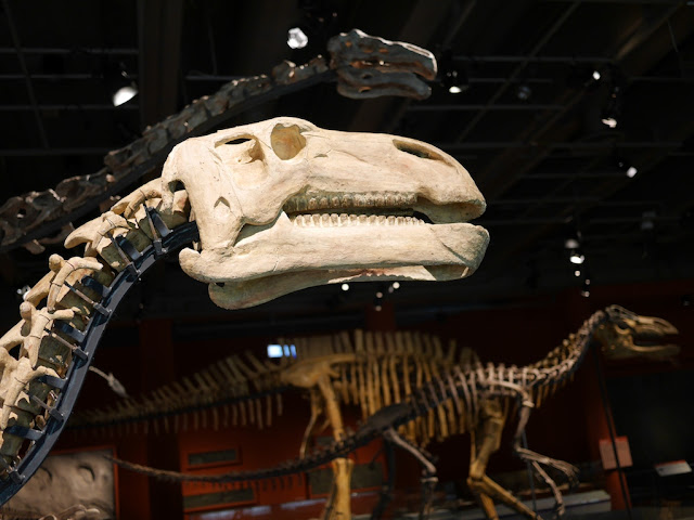 Jintasaurus meniscus with a Suzhousaurus megatherioides, Beishanlong grandis, and Lanzhousaurus magnidens in the background