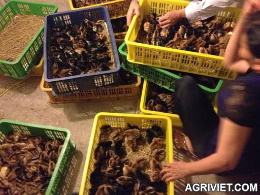 Agriviet.Com-IMG_0980.JPG