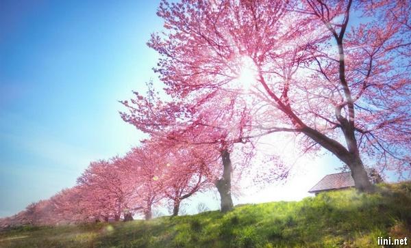 thơ hoa nắng tình xuân