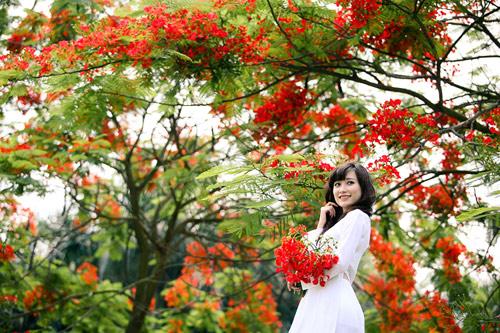 Ảnh nữ sinh áo dài bên cây hoa phượng