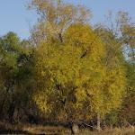 11-13-10 Ray Roberts Lake State Park
