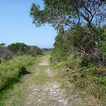Coastal Cemetary Trail near Botany Bay National Park (310481)