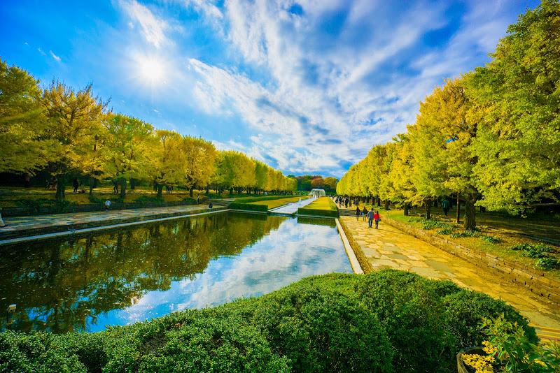 昭和記念公園 カナール イチョウ並木 写真6