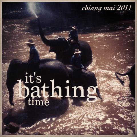 elephant park elephant bath, chiang mai