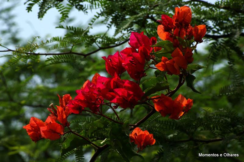 Bungavilias