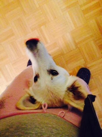 blogger-image--138963899 %Hundeblog