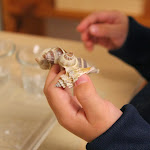 This boy is also working with shells. When this photo was taken, he literally spent half an hour just touching them, lifting them, looking at them. Nature, to preschoolers, is just so fascinating, and they enjoy having unhurried time during our extended work periods to explore to their heart's content!