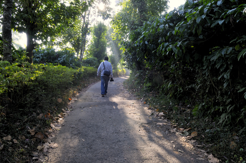 Coorg_coffee_walk