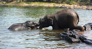 Coorg Tourism Package
