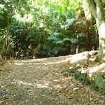 Trail at Blackbutt Reserve (399769)