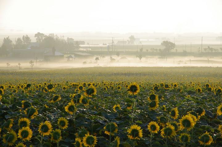写真:朝靄1