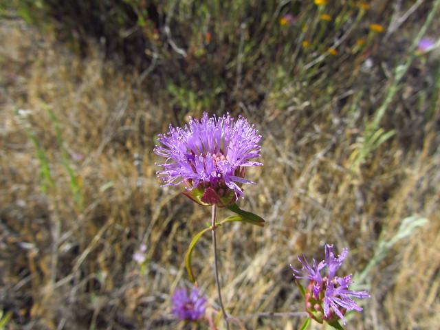 purple flowery bits