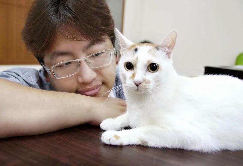 кормушка для кошек