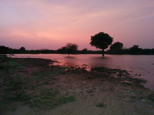 Sunset over an oasis in the Thar Desert