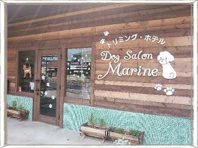 Dog Salon Marineのイメージ写真
