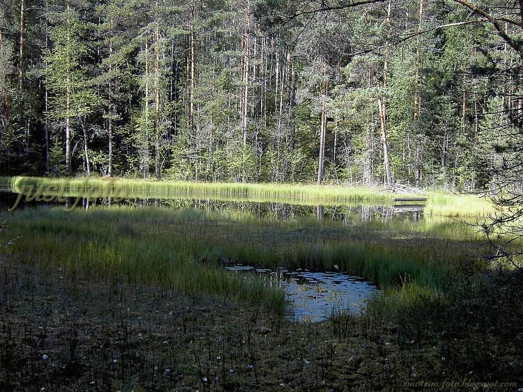 Семиозерье озеро болото пейзажи фото
