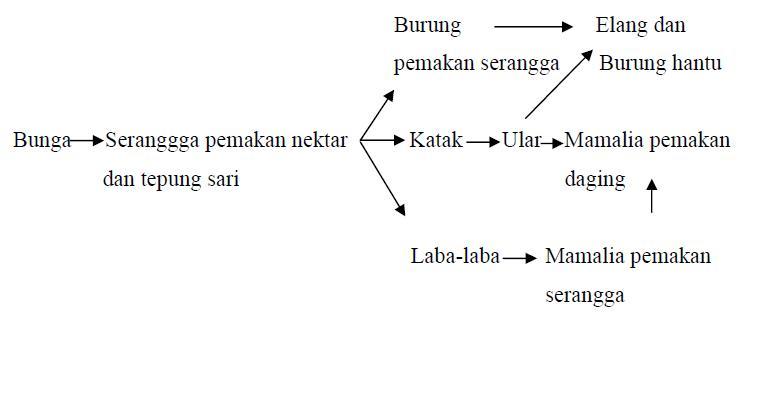 STUDY BIOLOGY, JAPANESE LANGUAGE, AND INDONESIAN LANGUAGE ...