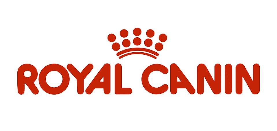 Royal canin toro negro hodowla rottweilerów rottweiler