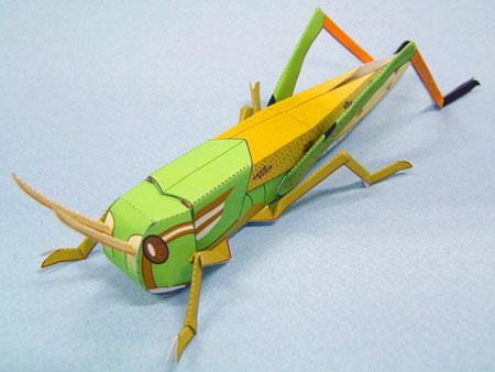 Migratory Locust Papercraft
