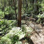Metal footbridge on the Rainforest walk (200707)
