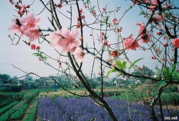 mùa xuân đang về