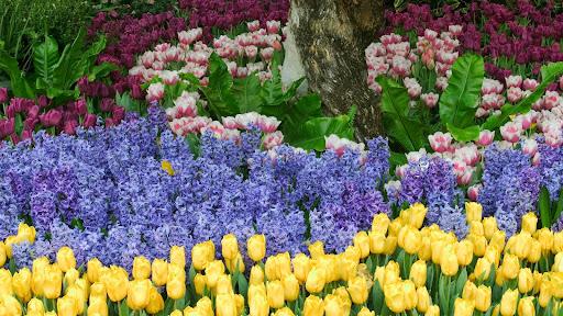 Vibrant Color.jpg