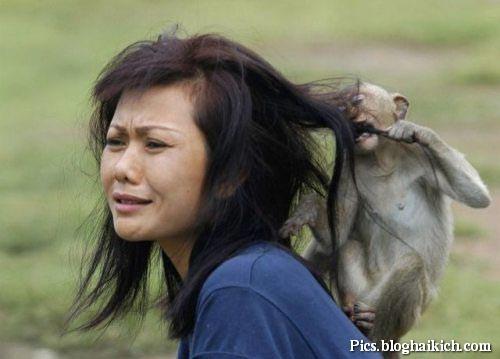 HÌnh ảnh khỉ nắm tóc cô gái