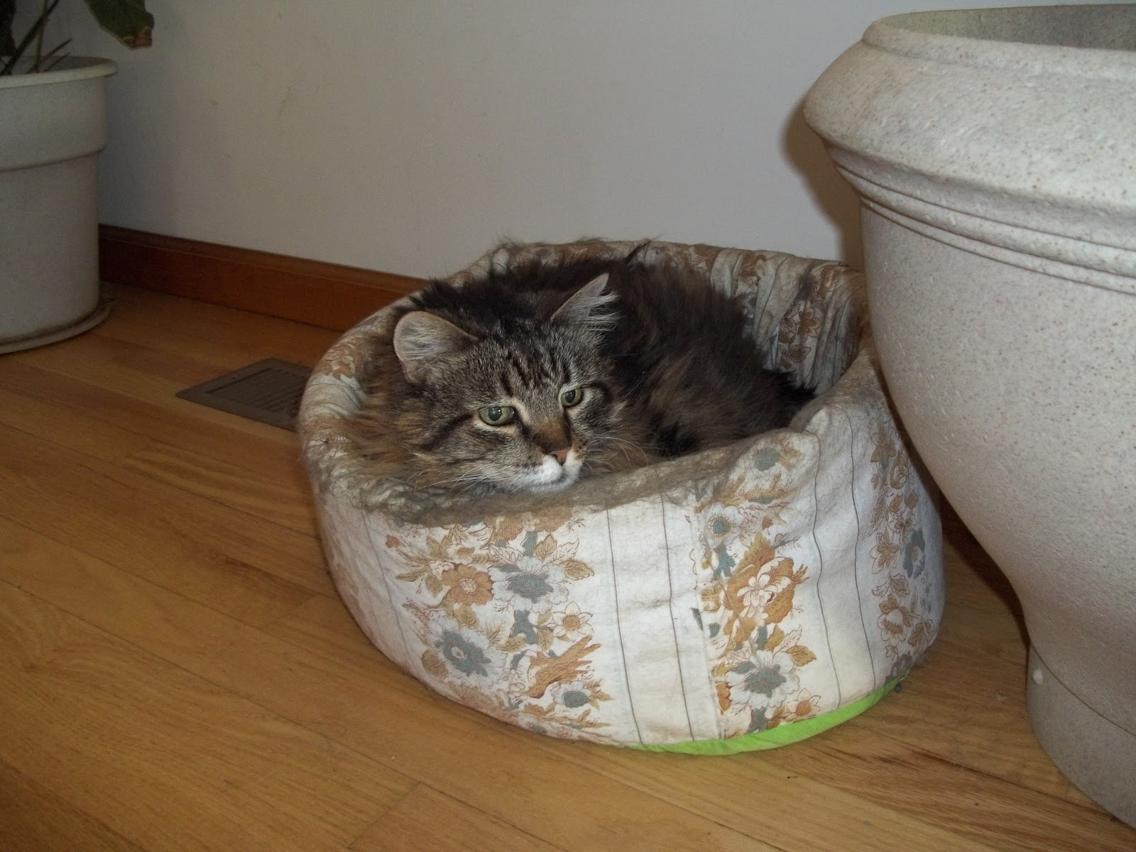 Glory 39 s garden kitty cat bed made easy and cheap for How to make a cat bed easy