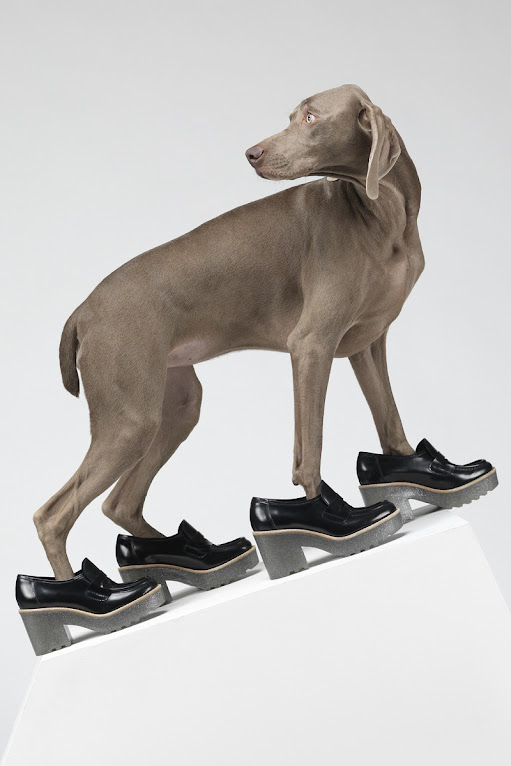 *Hat Dogs:美國攝影師William Wegman展現拿手獵狗展秀拍攝絕活! 2