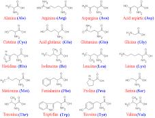 Los 20 Aminoacidos esenciales